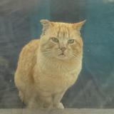 Pourquoi mon chat me lèche le visage