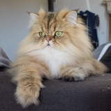Leon - Persian