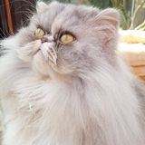 TamaraH (76) - Persan