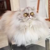 TamaraH (76) - Persian
