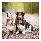 Jack & Easie - Basset Hound