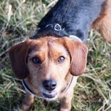 Kétamine, Little & Milka - Beagle