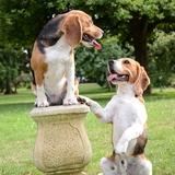 MARVEL - Beagle