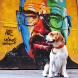 MJ - Beagle