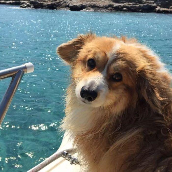 Rocky'family❣️ - Australian Shepherd