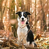 🐕loustic Familly 🐕 - Border Collie