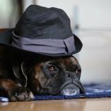 Havane - Boxer