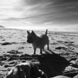 Elka - Cairn Terrier