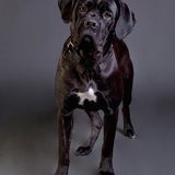 Lilly Wood  - Italian Mastiff