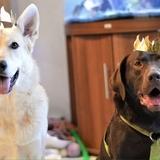lyra L'aventurière ♥ - Czechoslovakian Wolfdog