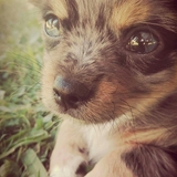Maestro - Chihuahua
