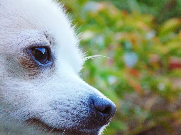 Marlo & Moka - Chihuahua