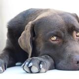 Jazz And Friends🌸😍 - Labrador Retriever