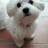 Deedee et Dolly - Poodle
