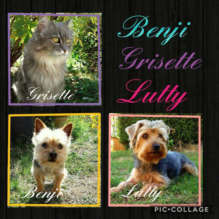 Benji ❤ Grisette ❤ Lutty
