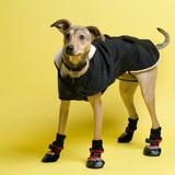 Mya - Greyhound