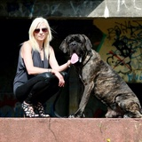 Logan - Neapolitan Mastiff